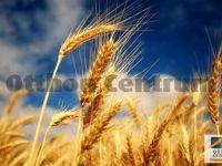 Eladó Mezőgazdasági Kunszállás