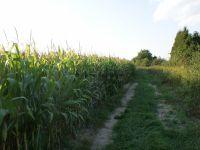 Eladó Mezőgazdasági Zalaegerszeg